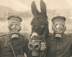 Two-German-soldiers-and-their-mule-wearing-gas-masks-in-WWI-1916