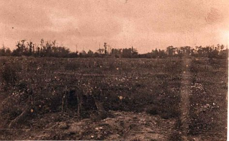 Gommecourt Wood from Fonquevillers. Phot Basil Hibbett 1919?