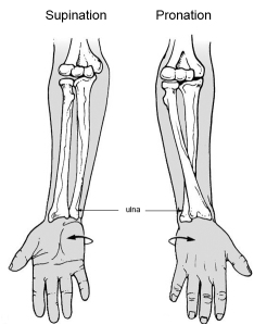 Pronation & supination.